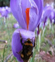 Kollektion für Schmetterlinge und Bienen
