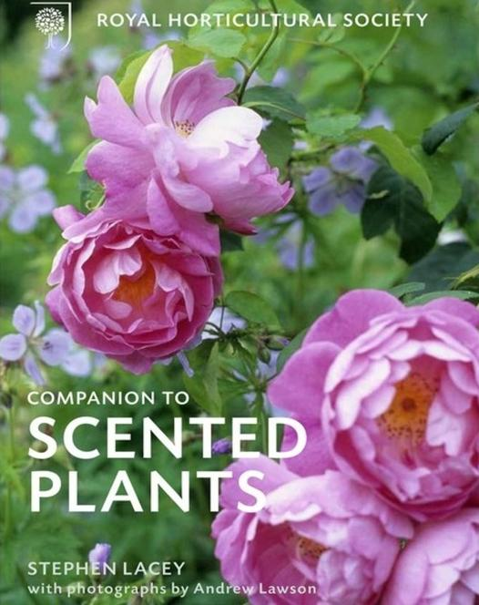 "Buch ""RHS Companion to Scented Plants"""