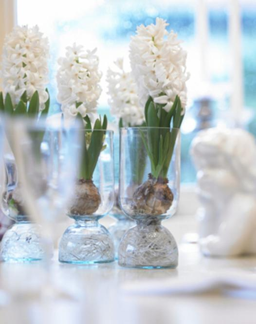 Präparierte Hyazinthe White Pearl