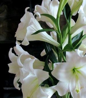 Lis White Present