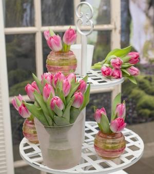 Tulipe Dynasty