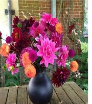 Collection Dahlias Rhapsody