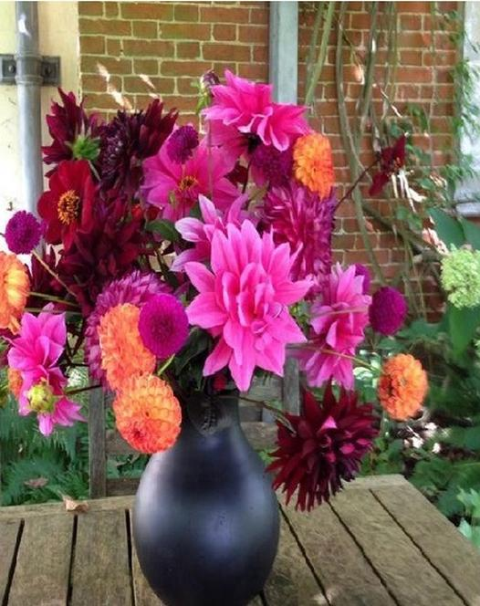 Dahlia Rhapsody Collection