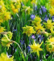 Narcisse Rip van Winkle