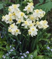 Narcissus Sailboat