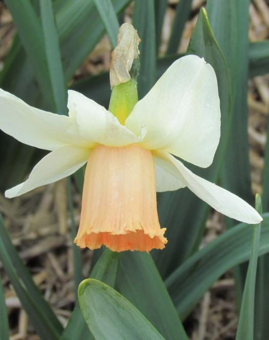 Narcis Salome