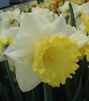 Narcis Finland