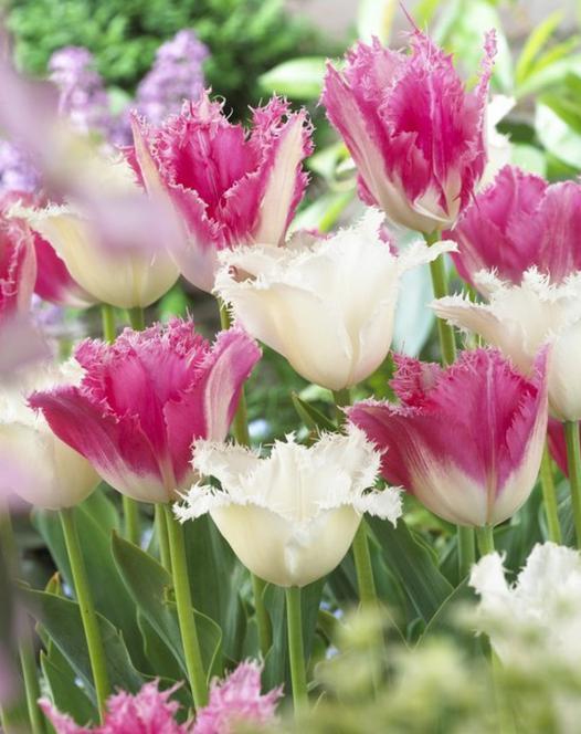 Collectie Rose en Wit
