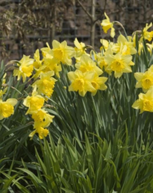 Narcis Rijnvelds Early Sensation