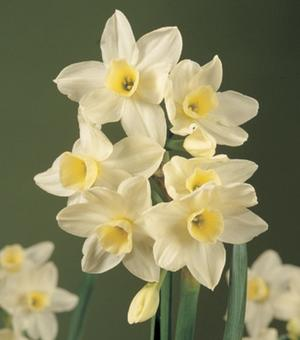 Narcis Silver Chimes