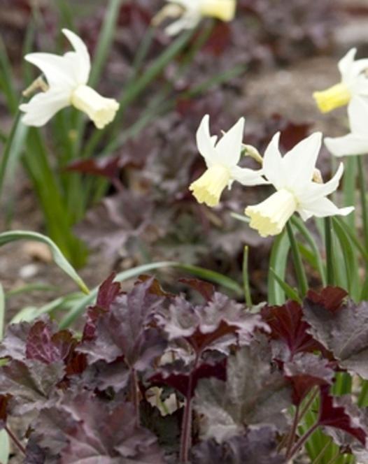 Narcis Jenny