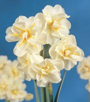 Narcis Sir Winston Churchill
