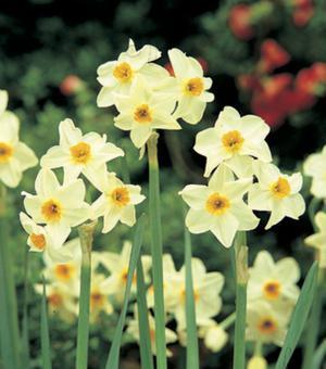 Narcis Cragford
