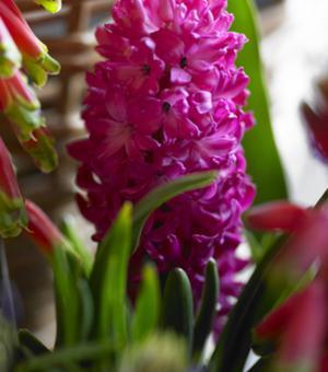 Hyacint Jan Bos