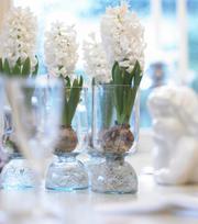 Geprepareerde Hyacint White Pearl