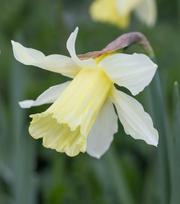 Narcissus W. P. Milner