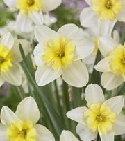Narcissus Radar Love