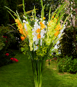 Gladioli Fruit Sundae Collection B