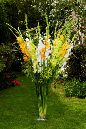 Gladioli Fruit Sundae Collection B