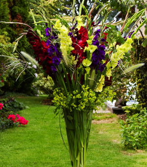 Gladioli Jewel Collection A