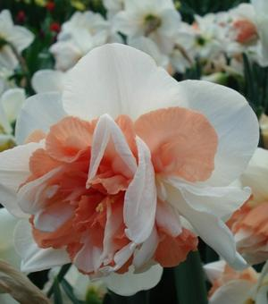 Narcissus My Story