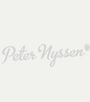 Tulip Ruby Prince ®
