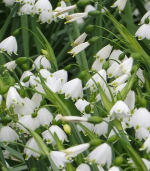 Spring White Collectie