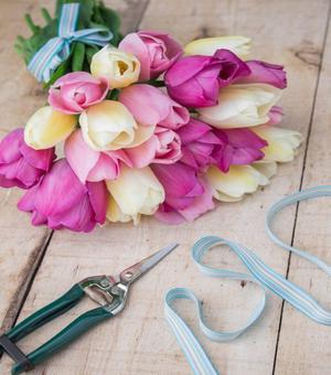 Licht und Verträumt Tulpe Kollektion