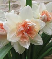 Narcisse My Story